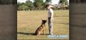 Train a dog Schutzhund style