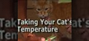 Take your cat's temperature