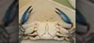 Clean blue crabs