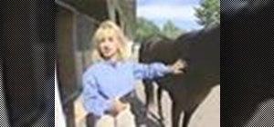 Clip a horse