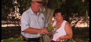 Identify and problems with the red bud, & catus trees