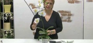 Make a simple orchid silk flower arrangement