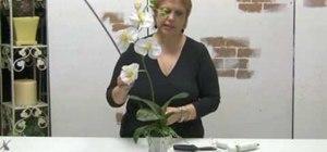 Make a simple orchid silk flower arrangement