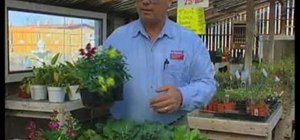 Choose cool weather veggies & flowers for your garden