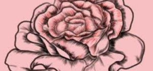 Draw a gorgeous realistic rose step by step