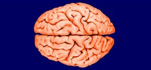 10 Ways Your Brain Can Trip You Out (and How To Prevent It)