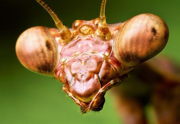 An Introduction to Macro Photography (Plus Some Insane Shots)