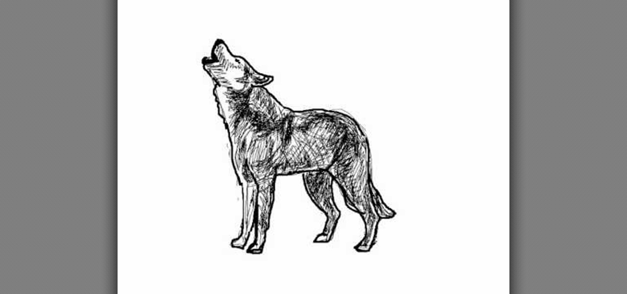 Black Wolf Howling Drawing How to Draw a wolf  lobo