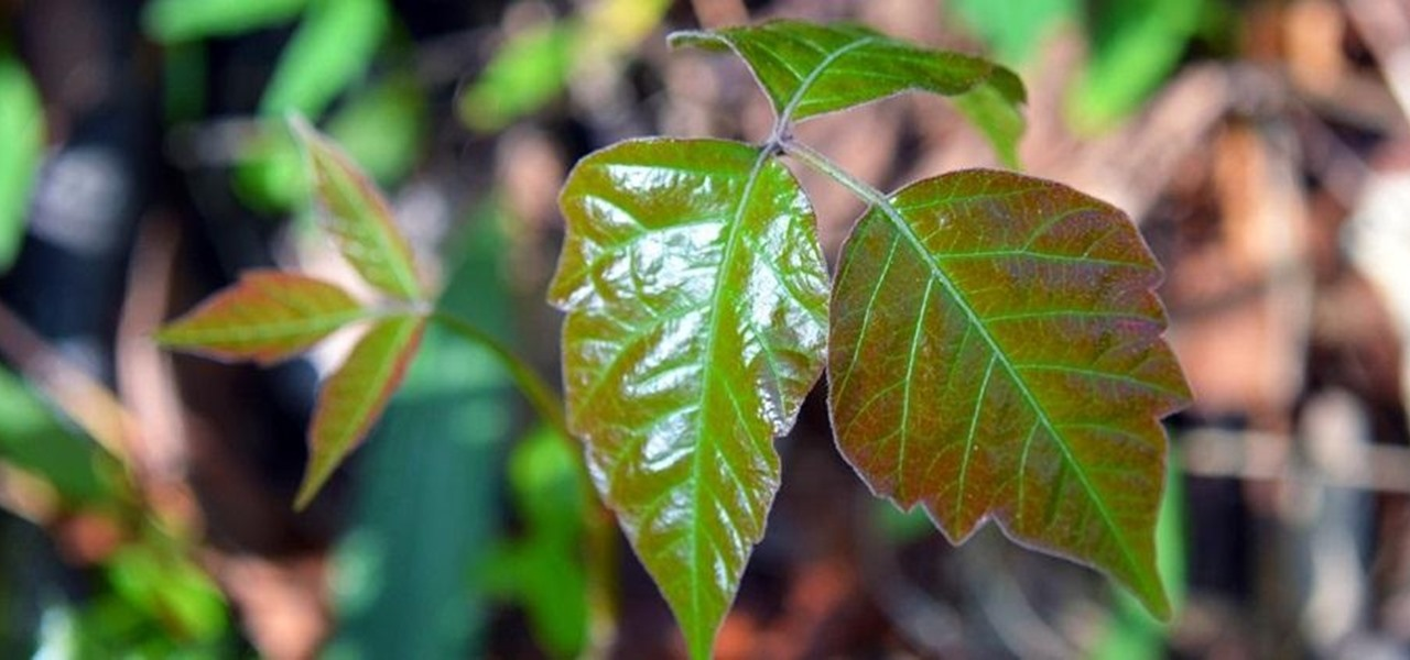 The Top 5 Home Remedies for Treating Poison Ivy and Poison Oak Rashes