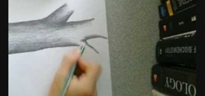 Draw a tree using pencil