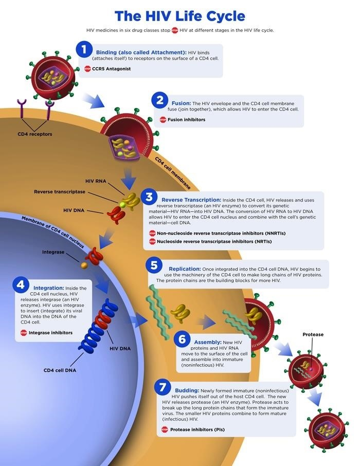 Scientists Show That the Earlier HIV Is Treated, the Better