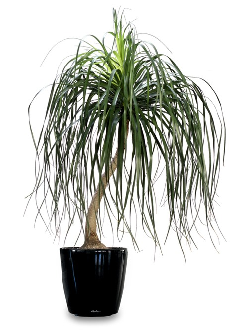 The New York Times' Top 15 Kill-Proof Houseplants