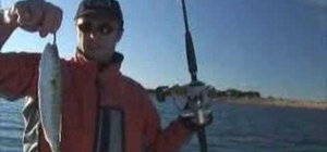 Use a bridle rig for live bait fishing