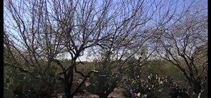 Process southwestern desert plants for eating