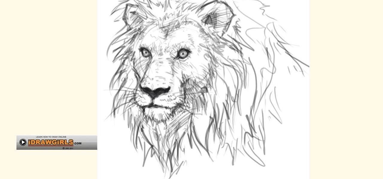 How to Draw a regal and proud lion for beginners « Drawing
