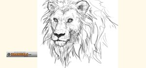 Draw a regal and proud lion for beginners