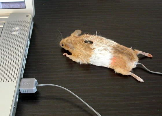 WTFoto of the Day: A Mouse Mouse