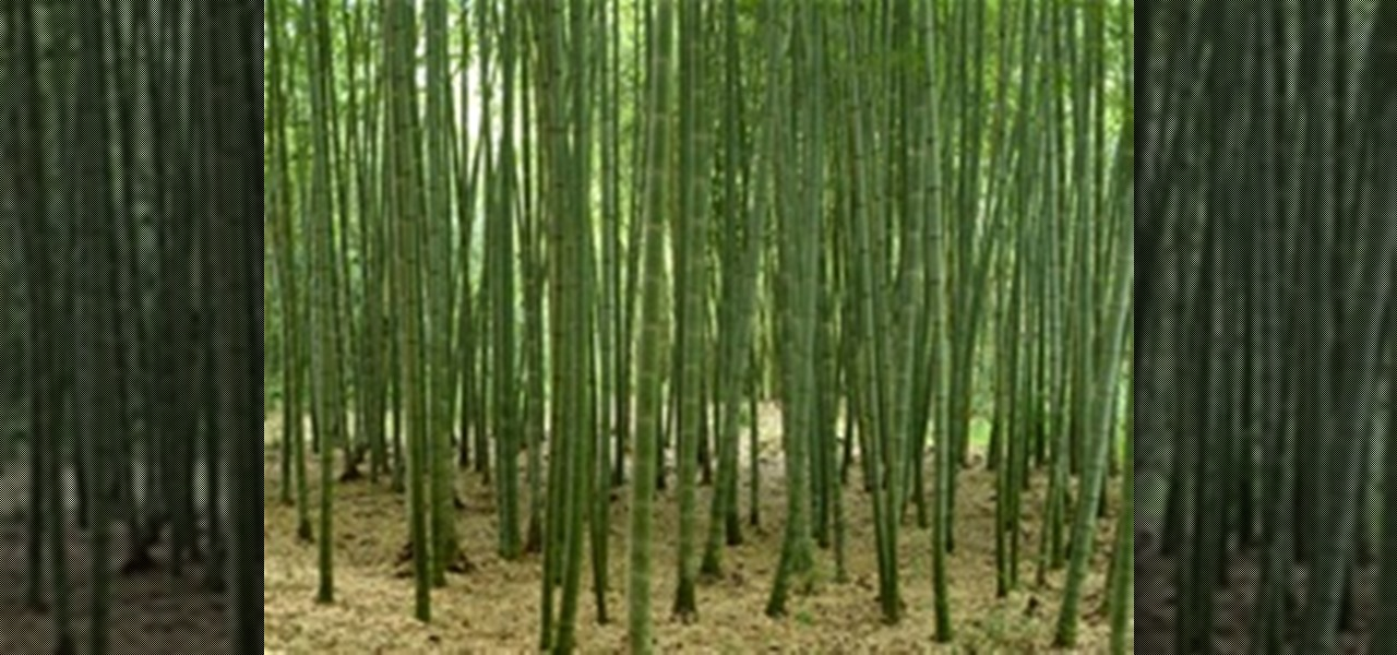 How to Grow Cold, Hardy Running Bamboo « Landscaping ...