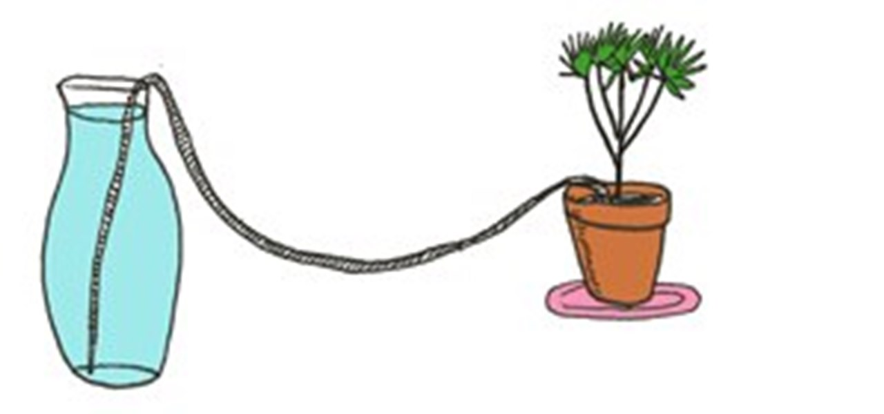 6 DIY Tips for Watering Your Houseplants While Away on
