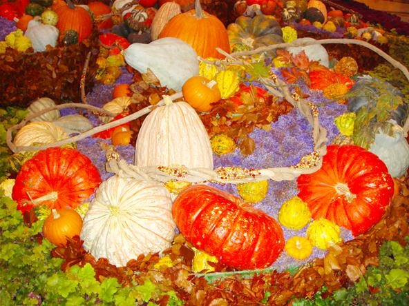 Vibrant Color Photography Challenge: The Great Pumpkin Patch