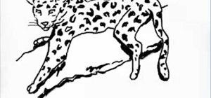 Draw a leopard