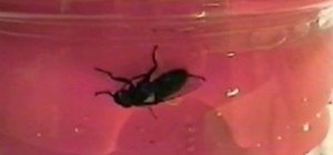 Revive a drowned fly