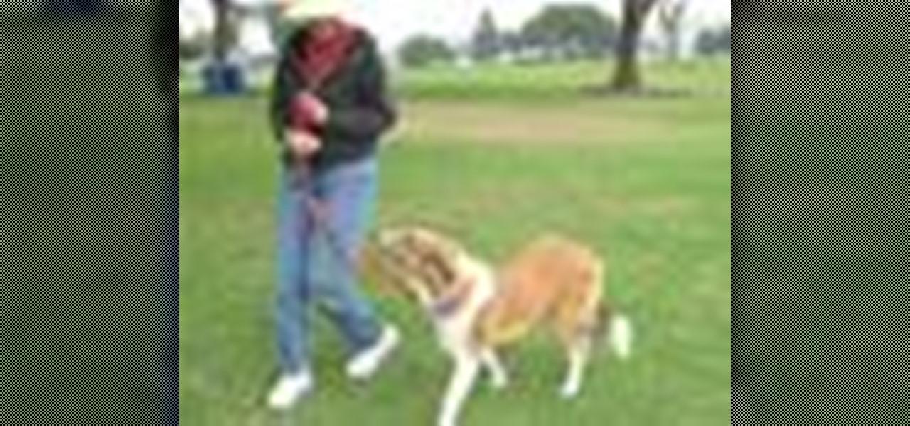 How To Teach Dog To Walk On Loose Leash