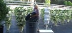 How to Construct a hydroponic growing tower with HydroHarvest