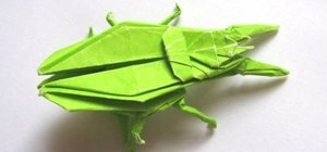 Origami a ground beetle