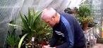 How to Propagate cyclamen plants