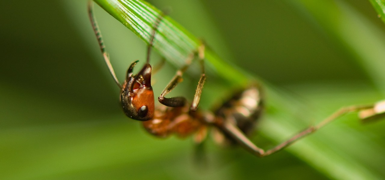 Ants Create Chemical Cocktails to Brew Antibiotics