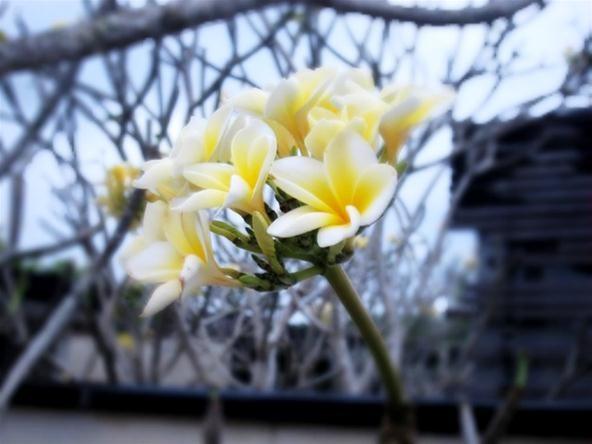 Bokeh Photography Challenge: Flower