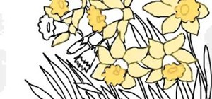 Draw daffodils