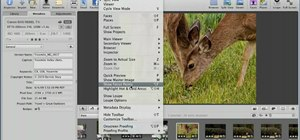 Show focus points in Apple Aperture 3