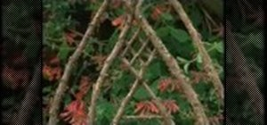Create a bent wood trellis