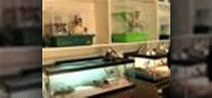 Set up a reptile terrarium