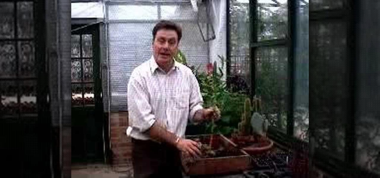How To Repot Lucky Bamboo Gardening Wonderhowto