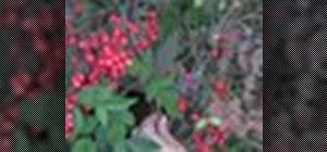Prune plants