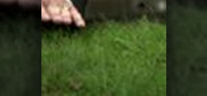 Turn your brown grass green again without chemicals