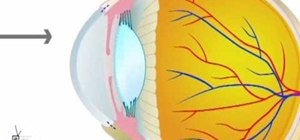 Detect glaucoma in a dog or cat eye