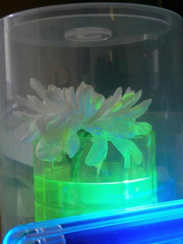 Prank Your Friends with Radioactive-Looking Mutant Plants That Glow Under Black Light