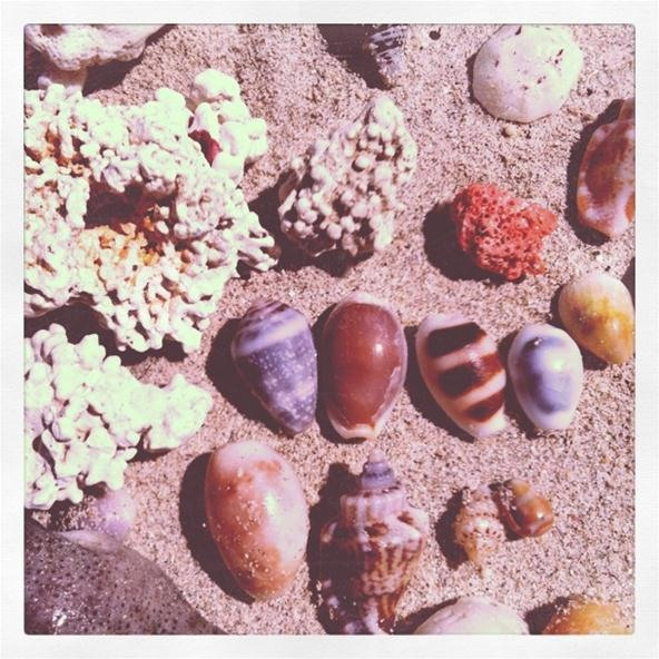 Instagram Challenge: I See Seashells by the Seashore