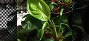 Grow low-light plants indoors