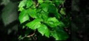 Treat poison ivy
