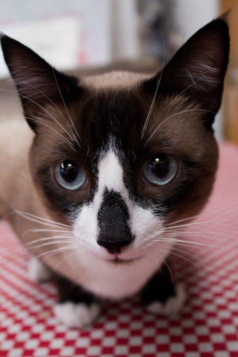 Pet Portrait Challenge: Tepache