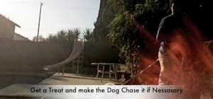 Teach your dog to do a simple obstacle course