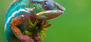 Chameleon of Colors.. EPIC!