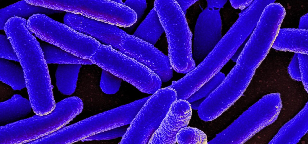 Cellular Pumps Help E. Coli Beat Antibiotics
