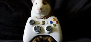Unban Your Xbox LIVE Account That is Banned Until 12/31/9999 by Tricking Microsoft's Banning System