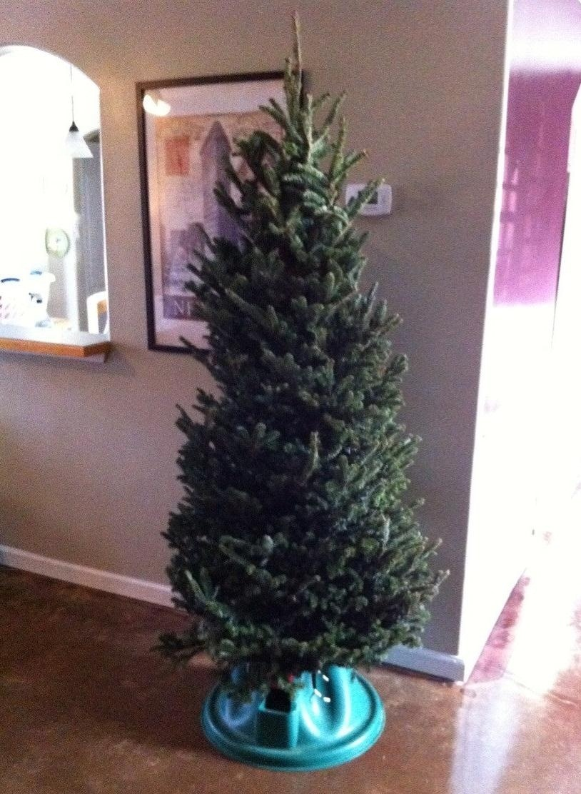 How To Take Care Of A Real Christmas Tree.How To Get A 5 Christmas Tree And How To Take Care Of It